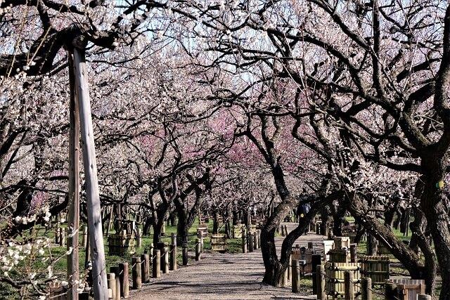 茨城県 観光スポット 水戸市 偕楽園