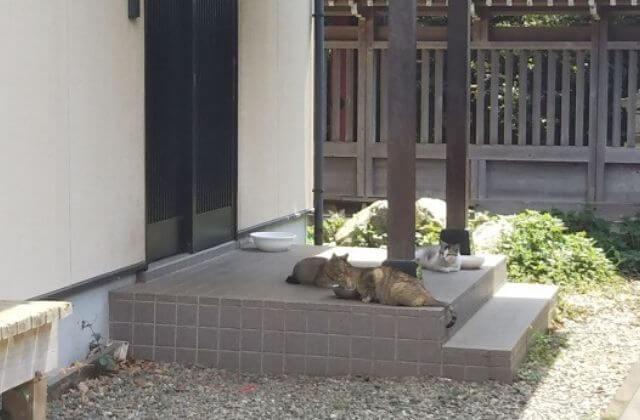 大杉神社 猫