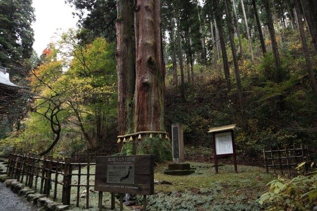 日立 観光 御岩神社 三本杉 パワースポット
