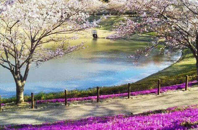 牛久大仏 芝桜 池 桜