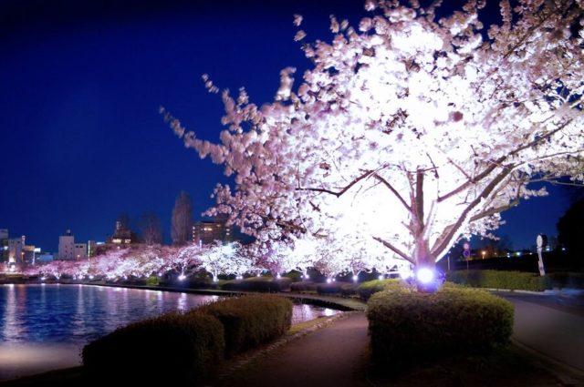 千波湖 イベント 桜まつり ライトアップ