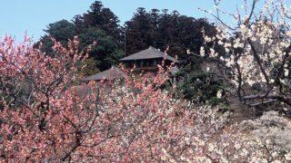 茨城 水戸 観光