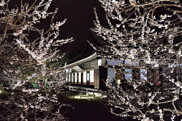 梅まつり 弘道館 ライトアップ