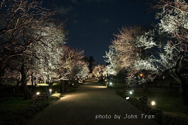 弘道館 夜 梅 ライトアップ