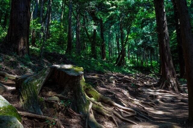 筑波山 登山 コース 迎場コース