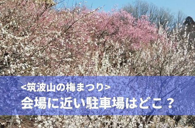 筑波山 梅まつり 駐車場