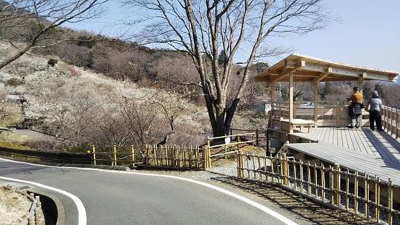 筑波山 梅まつり 駐車増