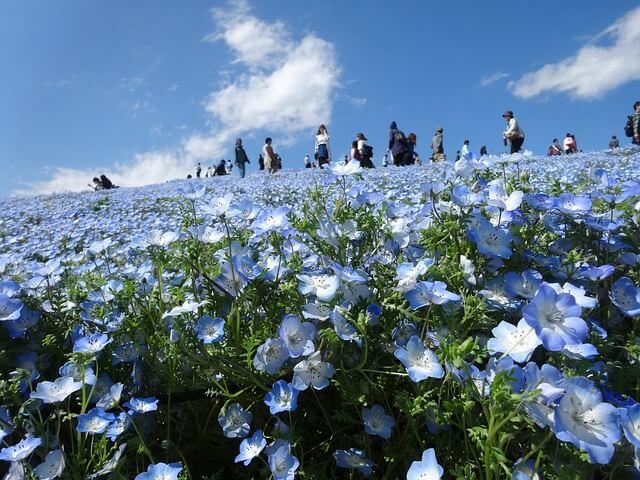 茨城県 ひたちなか市 観光スポット 国営ひたち海浜公園