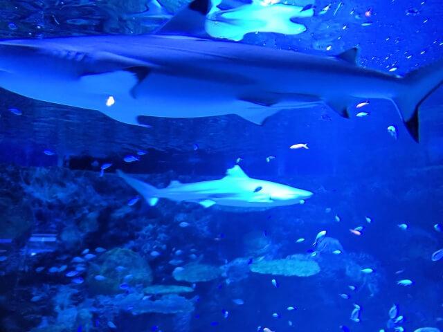 アクアワールド茨城県大洗水族館 サメ シャークウォッチング