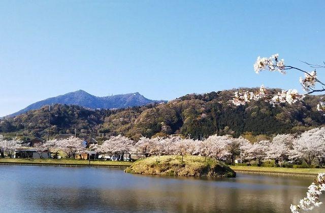 茨城県つくば市 観光 北条大池の桜