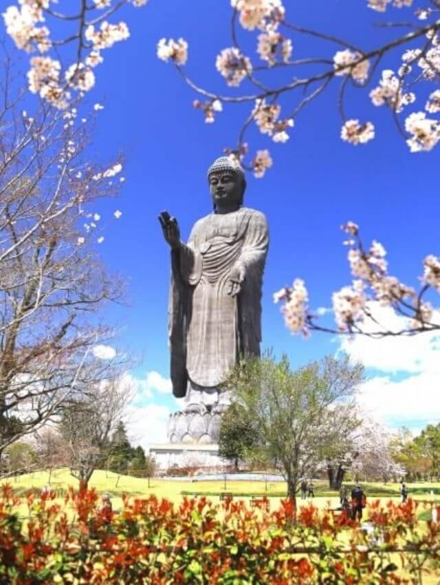 牛久大仏 桜 春 ポピー