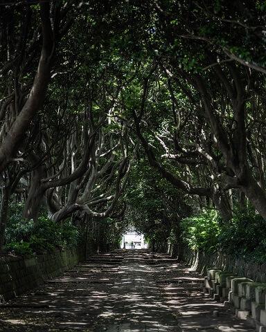 ひたち海浜公園 周辺 酒列磯前神社 樹叢