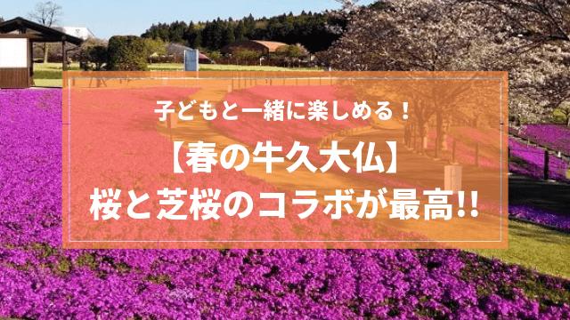 牛久大仏 桜 子連れ
