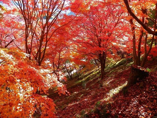袋田の滝 周辺 観光スポット 永源寺 もみじ寺