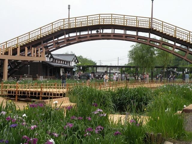 水郷潮来あやめまつり 園内の通路 橋