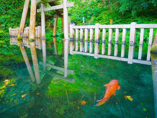 茨城 パワースポット おすすめ 鹿島神宮の御手洗池