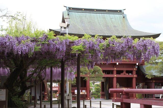 笠間市 おすすめ 観光スポット 笠間稲荷神社