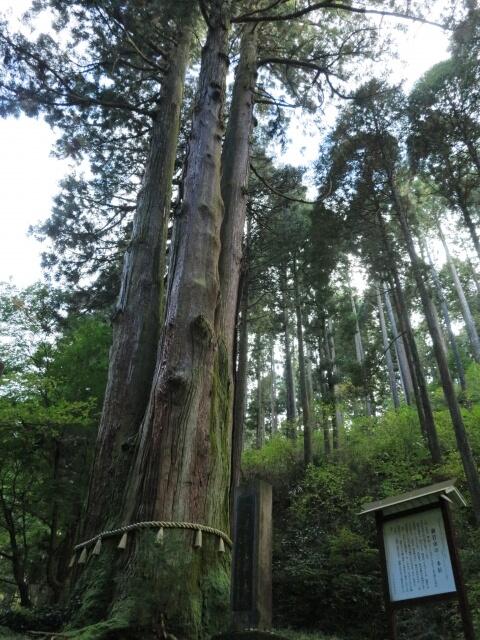 御岩神社 登山 三本杉