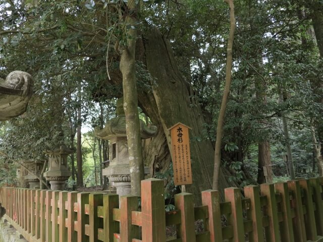 香取神宮 木母杉跡