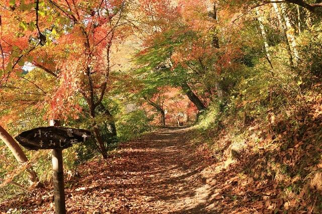 月待の滝 紅葉 もみじ苑への道