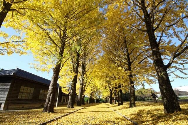 茨城県民の日 無料 割引 茨城県立歴史館