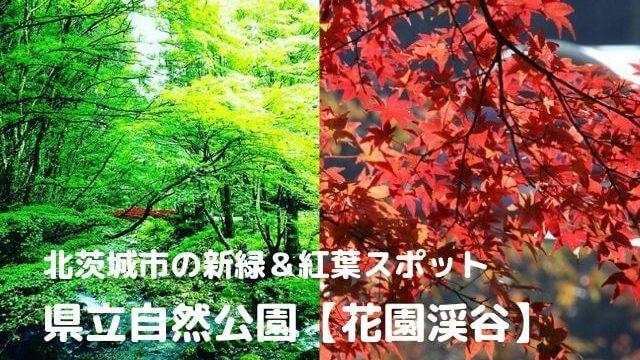 花園渓谷 紅葉 見頃