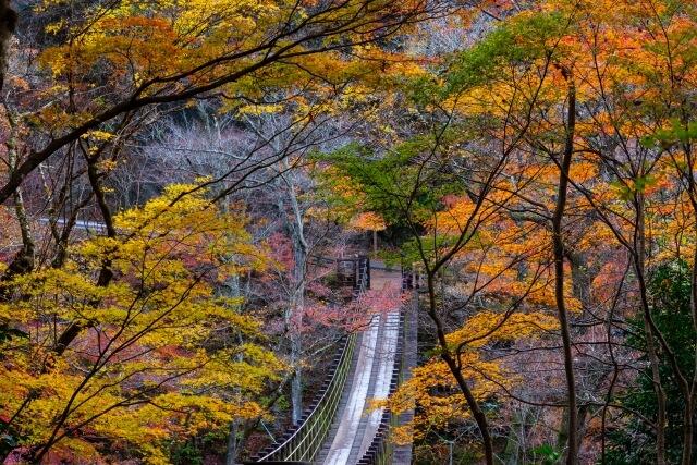 花貫渓谷 紅葉 汐見滝吊橋 おすすめスポット 高萩市