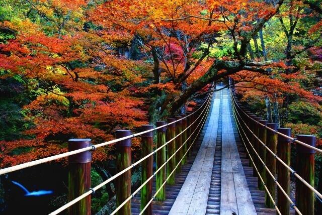 茨城県 高萩市 観光スポット 花貫渓谷