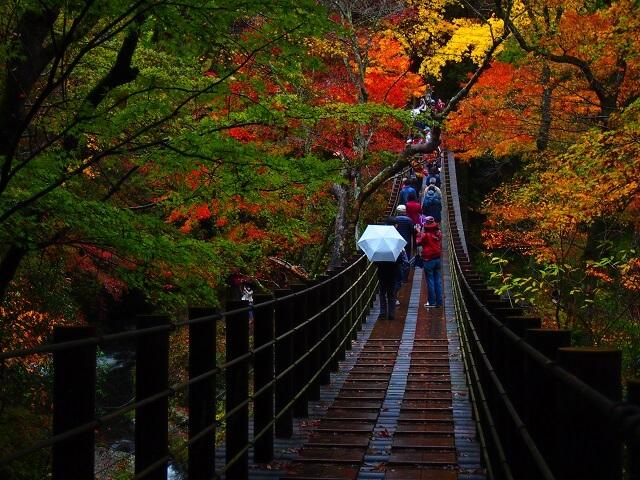 花貫渓谷 吊橋 紅葉
