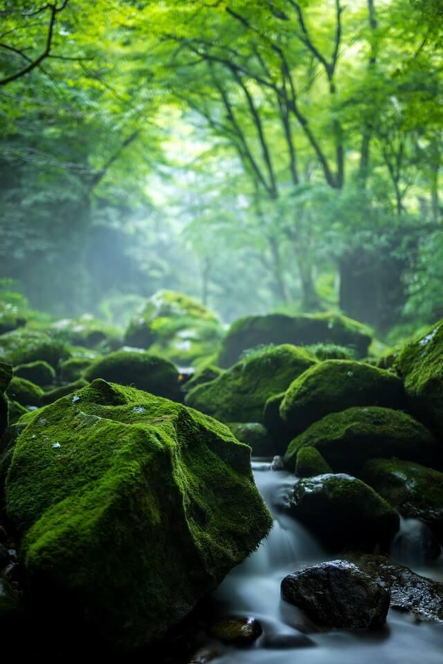 花貫渓谷 新緑 渓流