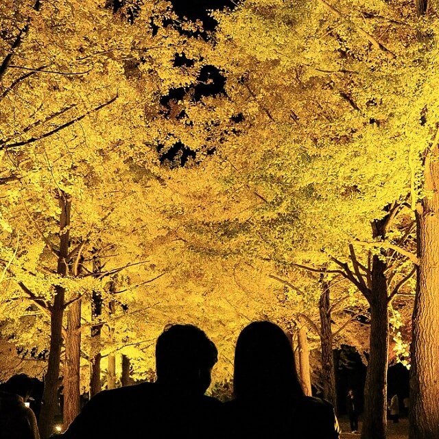 水戸 茨城県立歴史館 イチョウ ライトアップ
