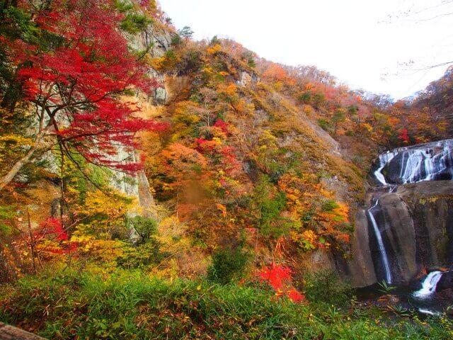袋田の滝 紅葉 見どころ