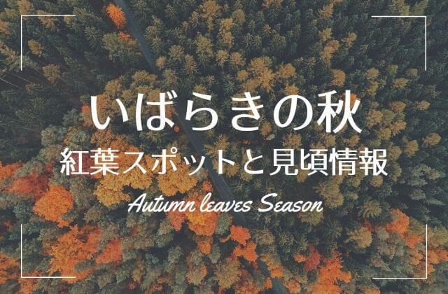 茨城 紅葉 見頃 時期 紅葉まつり
