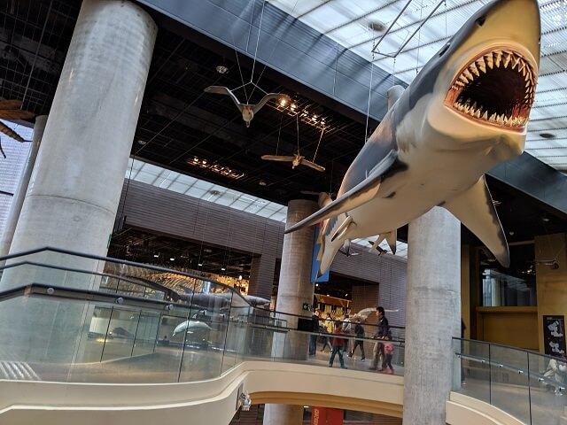 茨城県南部 坂東市 おすすめ 観光スポット ミュージアムパーク茨城県自然博物館