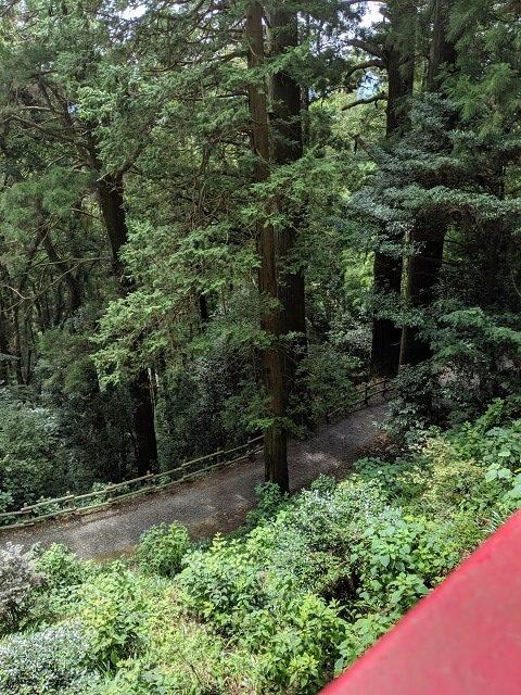 鷲子山上神社 大樹の森 天狗の足跡
