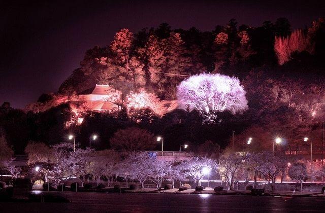 水戸 梅まつり ライトアップ 夜梅祭