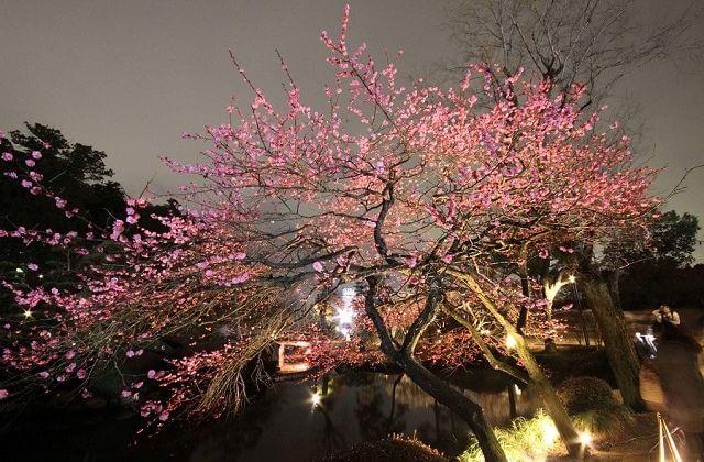 水戸 梅まつり ライトアップ