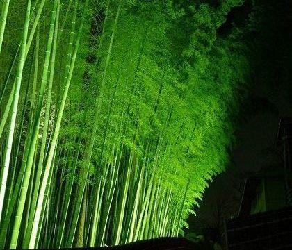 水戸 梅まつり ライトアップ 孟宗竹林