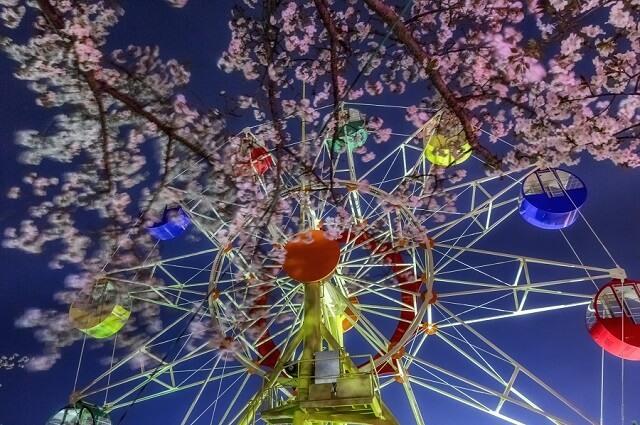 かみね公園 桜と観覧車