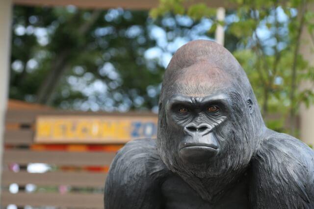 かみね公園 かみね動物園 ゴリラ