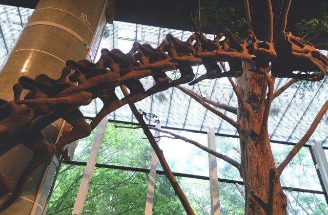 ミュージアムパーク茨城県自然博物館 クーポン 割引 恐竜の全身骨格 メタセコイア