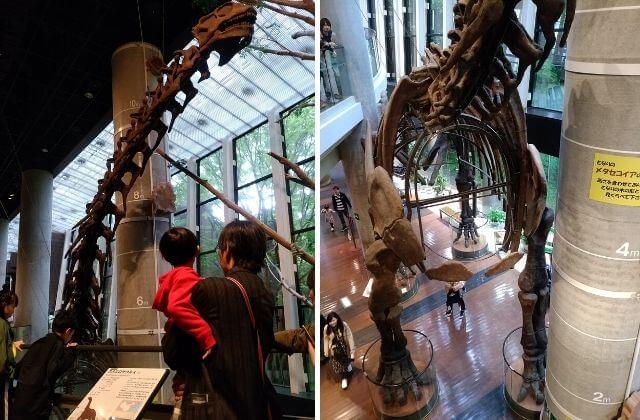 ミュージアムパーク茨城県自然博物館 クーポン 割引 恐竜の全身骨格