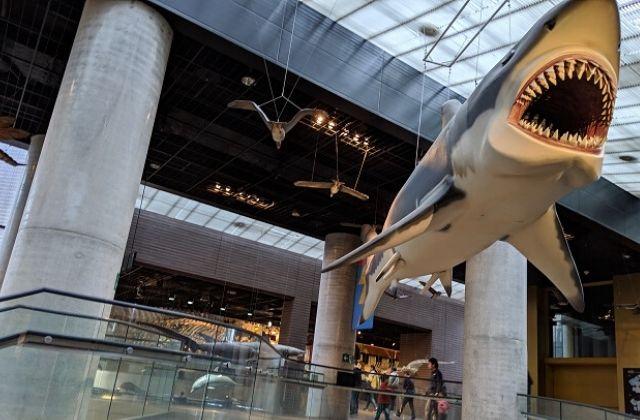 ミュージアムパーク茨城県自然博物館 館内 展示フロア