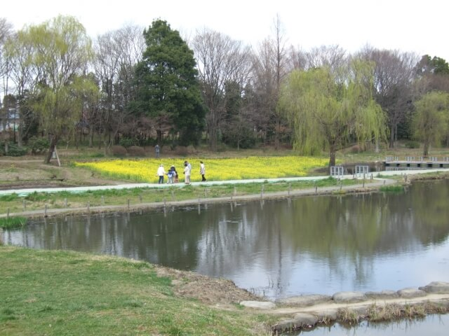 古河桃まつり 古河総合公園 菜の花
