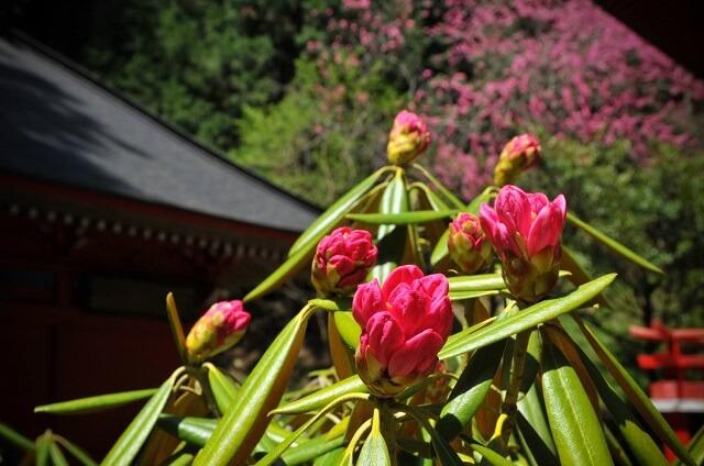 茨城県 神社 花園神社 北茨城市
