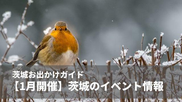 茨城 イベント 1月