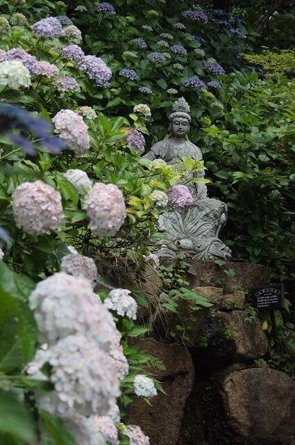 雨引観音 あじさいまつり 紫陽花