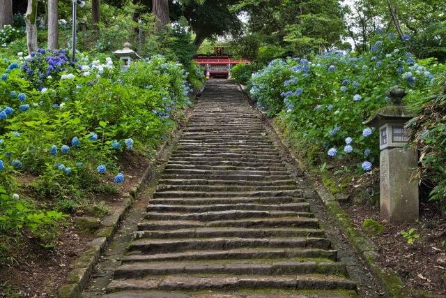 雨引観音 あじさい 階段