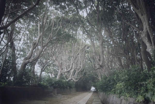 酒列磯前神社 パワースポット 参道 樹叢