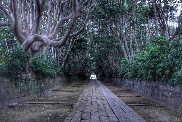茨城 パワースポット 樹叢 酒列磯前神社